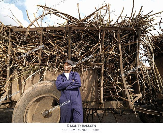 Worker With Truck Of Sugar Cane