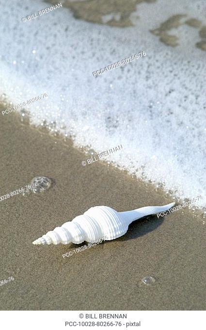 Seashell on sandy beach with ocean wash and seafoam