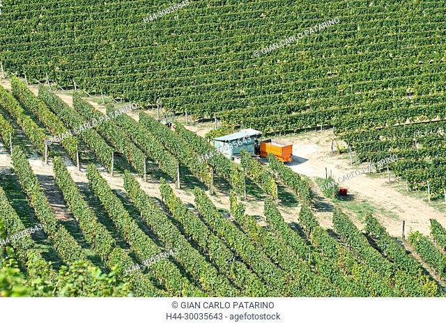 Italy, panorama of vineyards of Piedmont Langhe-Roero and Monferrato on the World Heritage List UNESCO. Italy, Piedmont, Vineyards