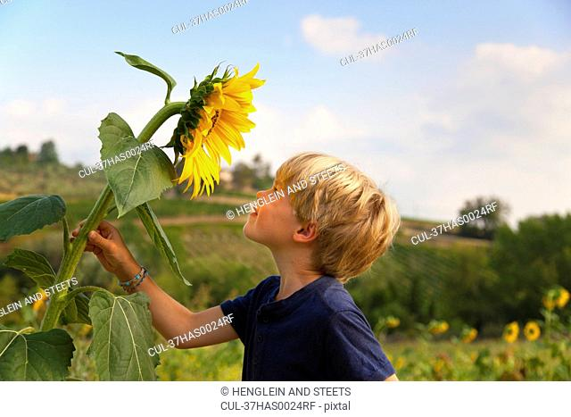Boy smelling sunflower outdoors