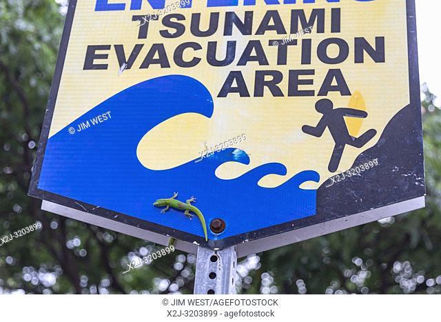 Kailua-Kona, Hawaii - Gold dust day geckos (Phelsuma laticauda) on a tsunami evacuation area sign near the Pacific Ocean