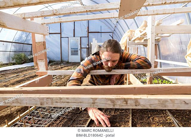 Caucasian farmer examining plants in greenhouse
