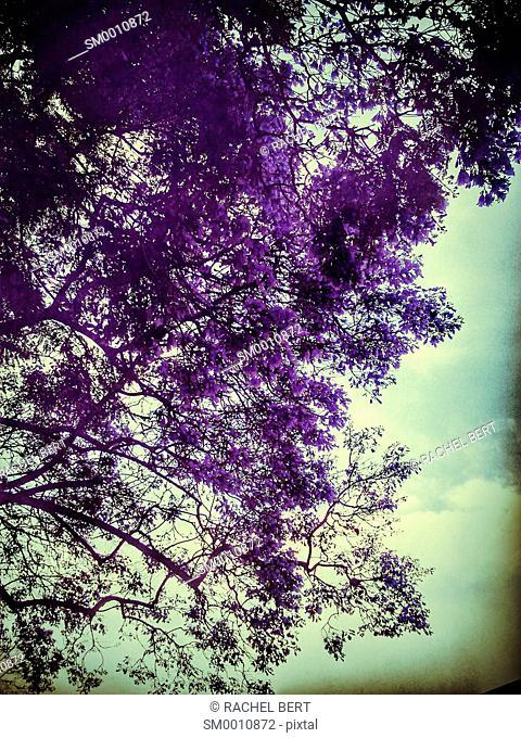 Purple tree structure
