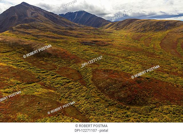 The vibrant coloured tundra on the hillsides surrounding Dawson City; Yukon, Canada