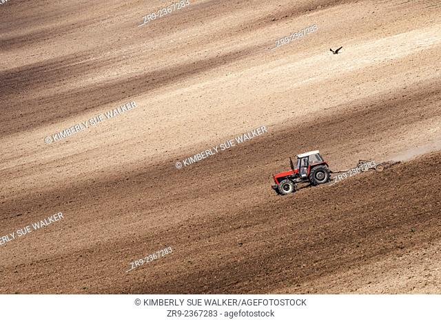Tractor plowing agricultural fields in autumn harvest, Nesovice area, South Moravia, Czech Republic, Europe