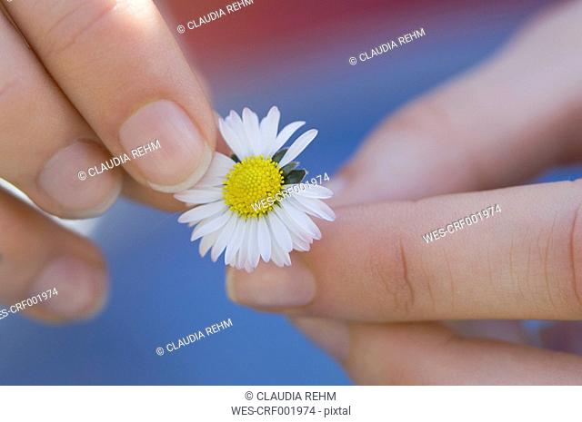 Germany, Bavaria, Woman Picking Flower Petal, close up