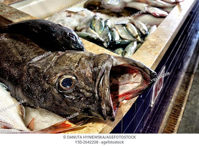 Europe, Portugal, Algarve, Faro district, Lagos, fish market