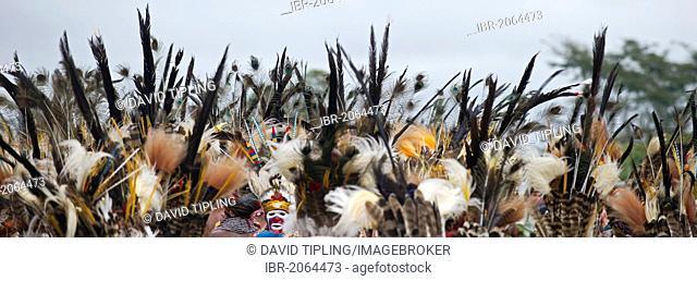 Western Highlanders, wearing sicklebill feathers, at Mount Hagen Show, Western Highlands, Papua New Guinea, Oceania