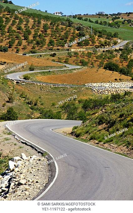 Road winding between fields of olive trees, somewhere between the villages of Alora and Antequera in Andalusia, Spain