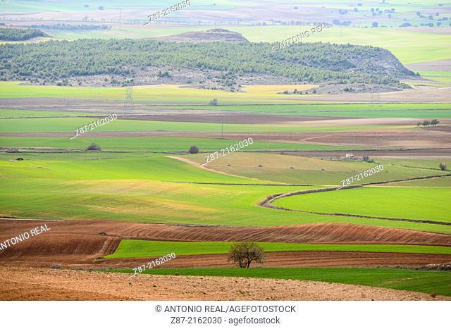 Grain field, valley of river Záncara, Villar de Cañas, Cuenca province, Castilla-La Mancha, Spain