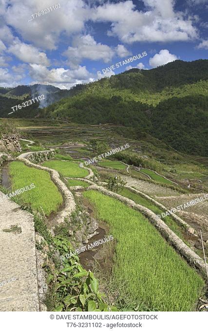 Beautiful rice terraces in Fidelisan village, Sagada, Mountain Province, Philippines
