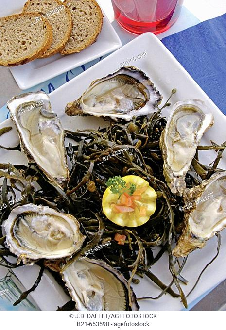 Food: Oysters from the Bassin d'Arcachon. Gironde. France