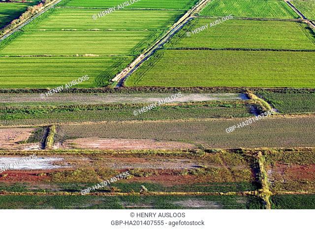 France - Camargue - Gard (30) - Ricefields - August 2009