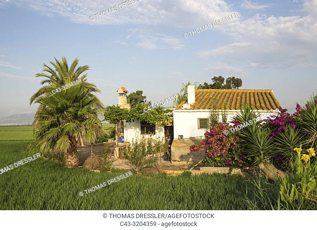 Small farm house amidst rice fields (Oryza sativa). In July. Environs of the Ebro Delta Nature Reserve, Tarragona province, Catalonia, Spain