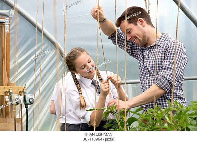 Teacher and schoolgirl learning gardening stringing plants in greenhouse