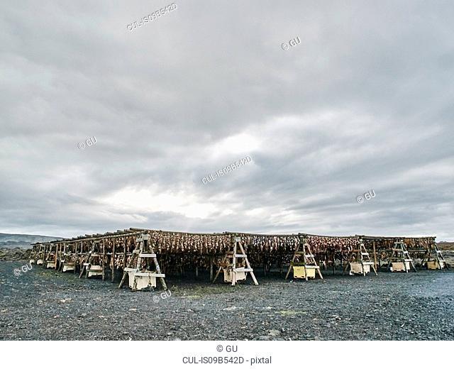 Racks of fish drying outdoor, Reykjavik, Iceland