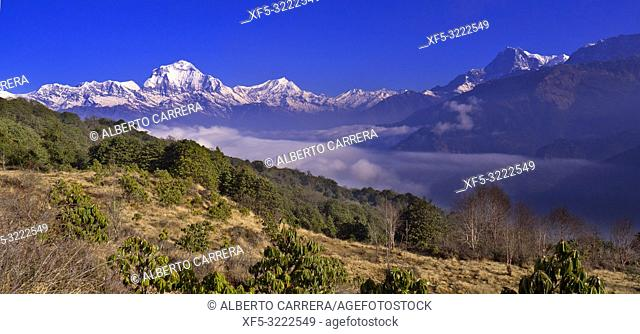 Dhaulagiri Range, Annapurna Range Sunrise, Poon Hill View Point, Ghorepani, Annapurna Conservation Area, Himalaya, Nepal, Asia