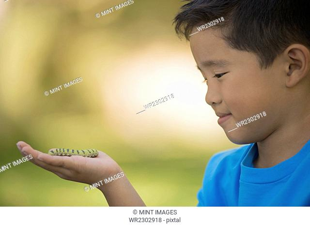 A boy holding a gecko or lizard on his hand