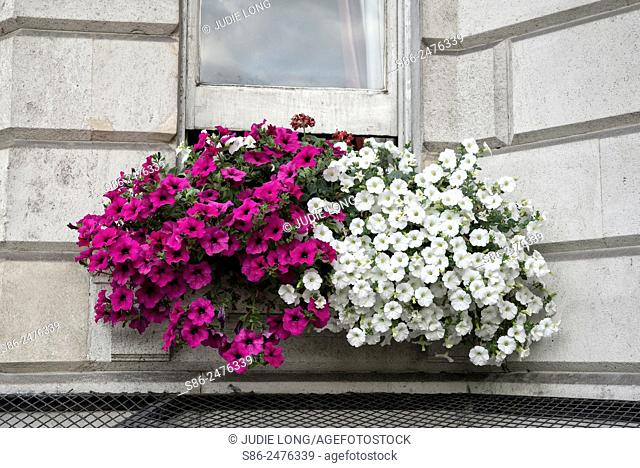 Beautiful Flower Box on a Piccadilly Residential Building, London, England
