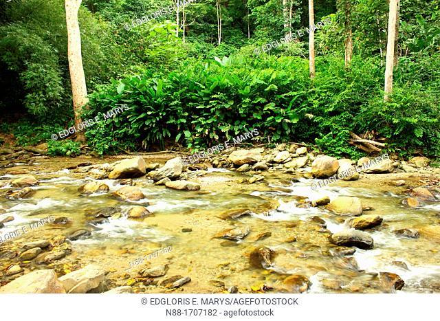 Henri Pittier National Park, Venezuela