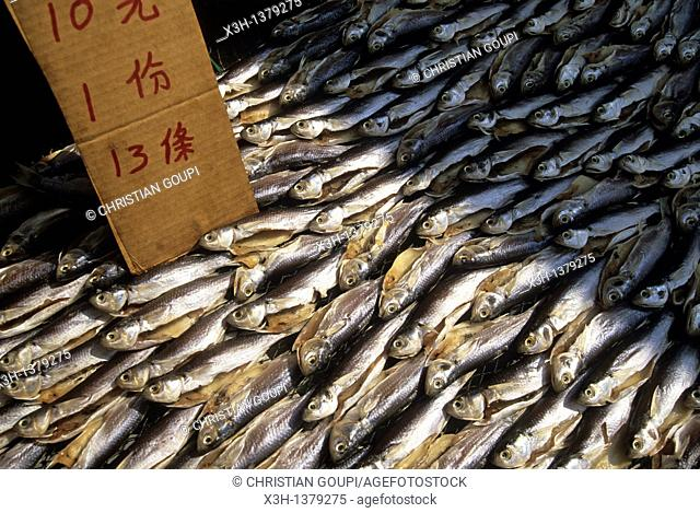 pilchards, Chung Chau island, Islands District, New Territories, Hong-Kong, People's Republic of China, Asia