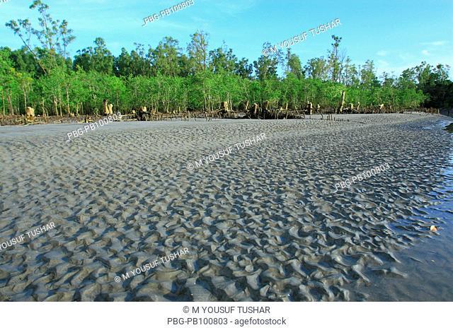 Landscape of Ruapali char, at kuakata, in Bangladesh September 30, 2007 Kuakata, locally known as 'Sagar Kannya' or daughter of the sea