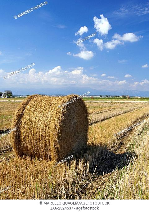 Hay bale after rice harvest. Ebro River Delta Natural Park, Tarragona province, Catalonia, Spain