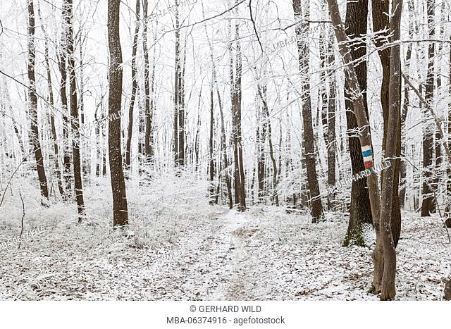 with hoarfrost covered trees in the Vienna Wood, Vienna, Austria