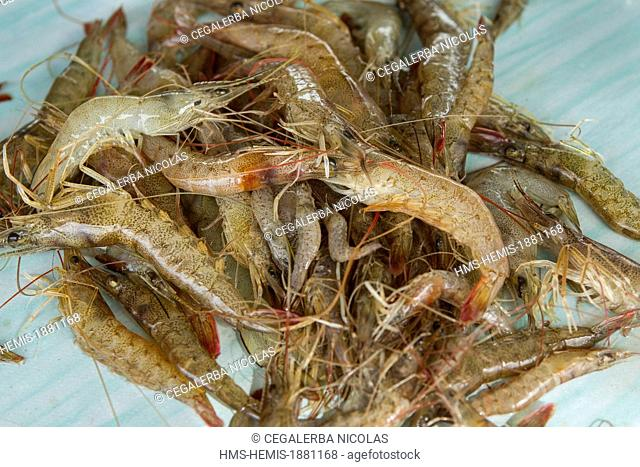 Indonesia, Sumatra Island, Aceh province, Calang, shrimp in traditional fish market