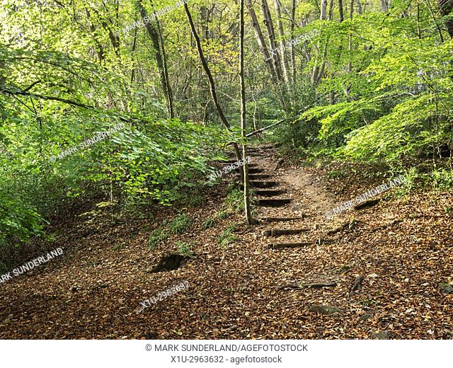 Steps on the Footpath in Nidd Gorge Woods in Autumn Knaresborough North Yorkshire England