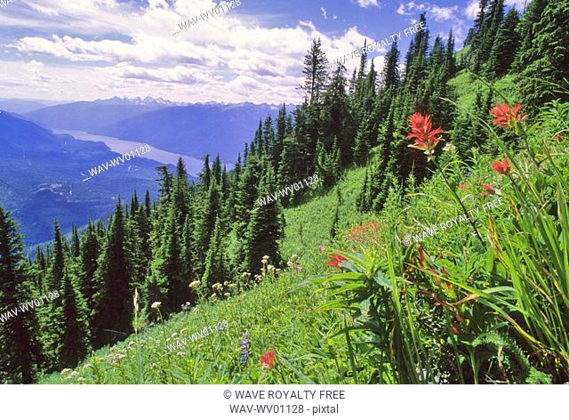 Indian Paintbrush flowers bloom in the alpine meadow above Slocan Lake BC