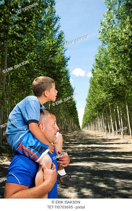 Father showing son 8-9 poplar trees in tree farm