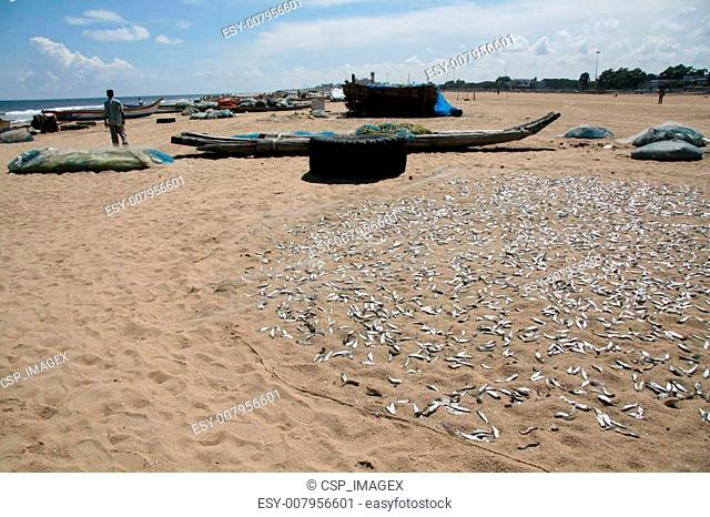 Fish - Marina Beach, Chennai, India