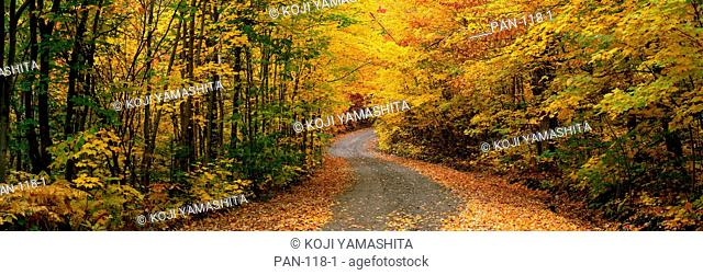 Forest Road, near St. Hippolyte, Laurentides, Quebec, Canada