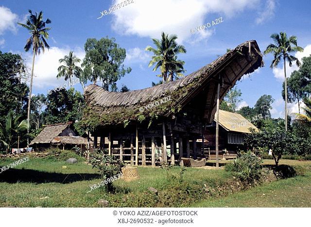 toraja people, sulawesi, indonesia