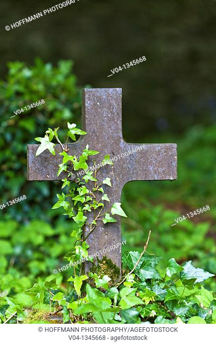 Cross at a graveyard at Muckross Abbey, County Kerry, Ireland, Europe