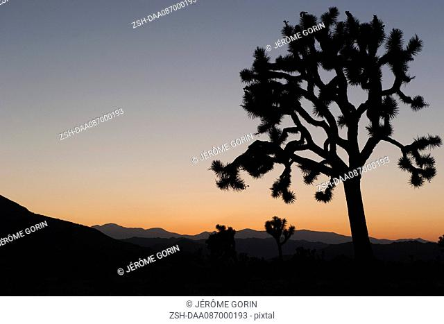 USA, California, Joshua Tree National Park at twilight