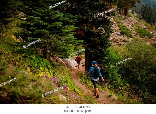 Two women hiking along path, rear view, Mineral King, Sequoia National Park, California, USA