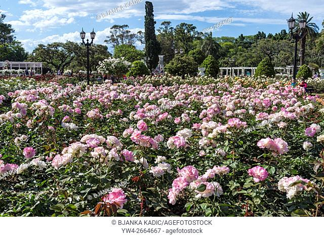 Rose Garden, Charles Aznavour roses, Rosedal, Buenos Aires, Argentina