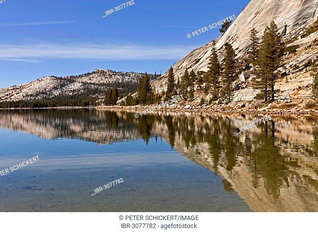 Conifers being reflected in Tenaya Lake