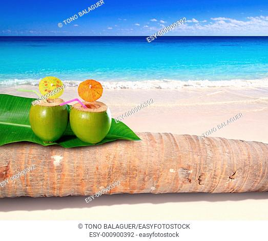 coconut cocktails on palm tree trunk in turquoise Caribbean beach