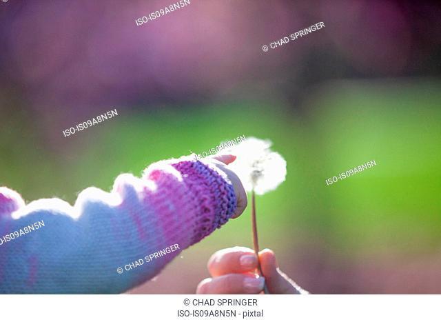 Baby girl touching dandelion clock