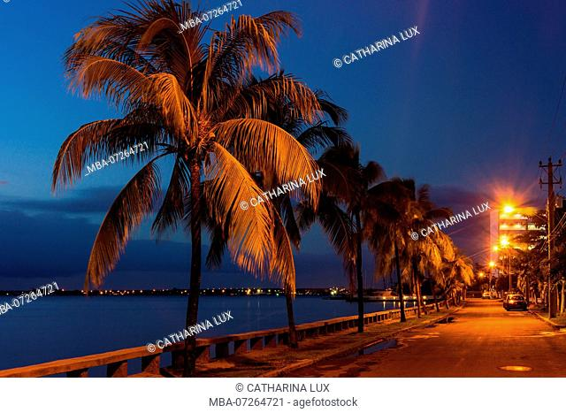 Cuba, Cienfuegos, La Punta, Calle 35, palm trees in the evening light