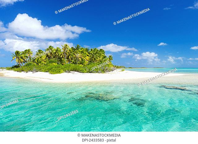 Tropical sunny island with palm trees and blue ocean; Tikehau, French Polynesia