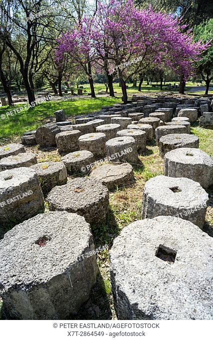 Ancient column drums at Olympia at springtime with the judas trees in bloom. Ancient Olympia, Peloponnese, Greece