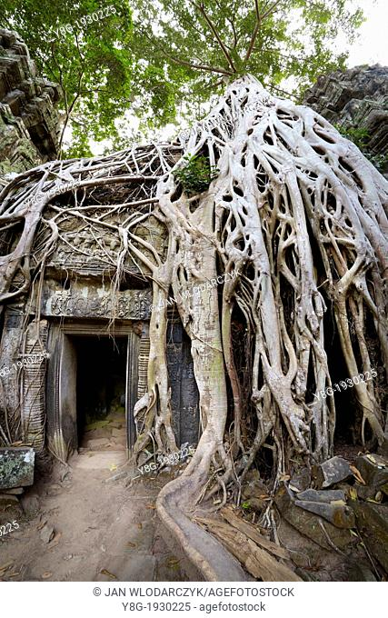 Angkor - tangle of roots of overgrowing ruins of the Ta Prohm Temple, Angkor Temples Complex, Siem Reap Province, Cambodia, Asia, UNESCO