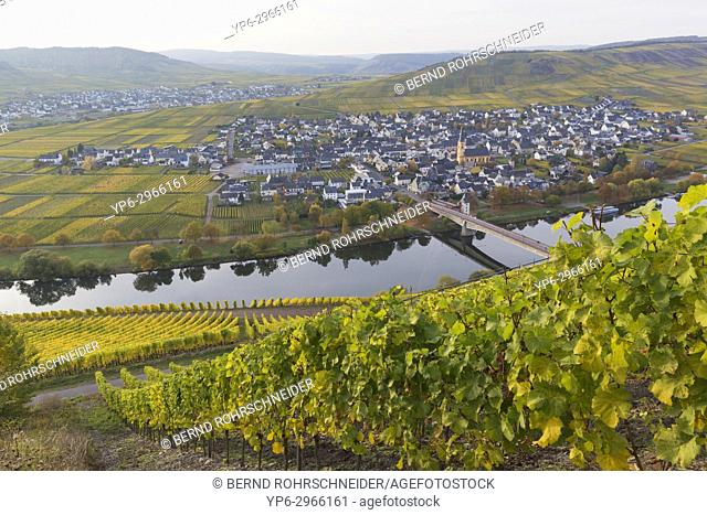 river Moselle with vineyards and the village Trittenheim, Leiwen, Rhineland-Palatinate, Germany