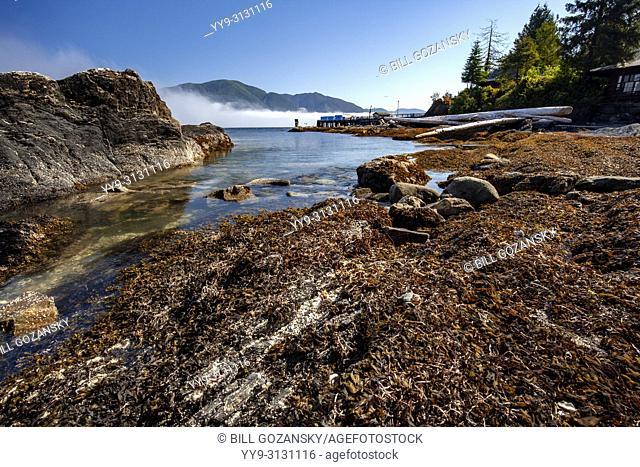 Rocky coastline view at Port Renfrew, Vancouver Island, British Columbia, Canada