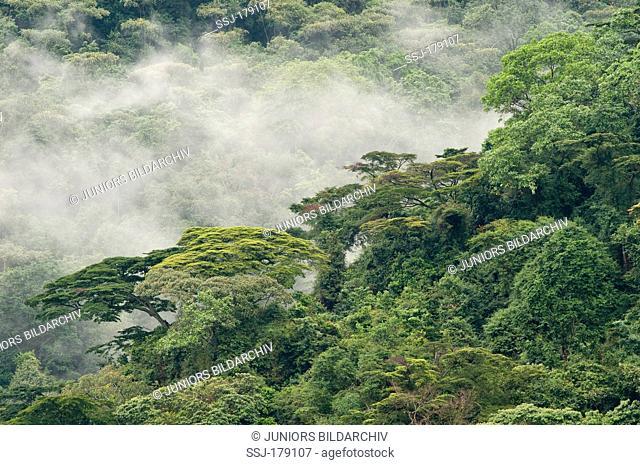Tropical rainforest, Bwindi Impenetrable Forest, Uganda