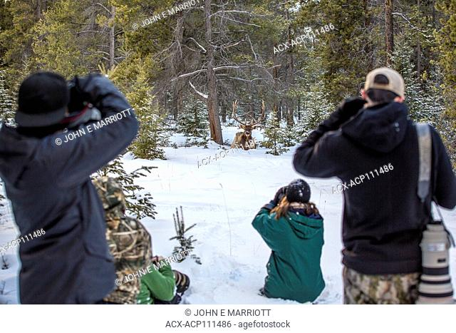 Wildlife photography workshop, Jasper National Park, Alberta, Canada
